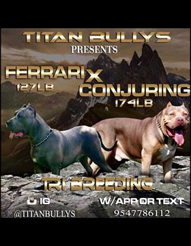 The Conjuring  & Ferrari